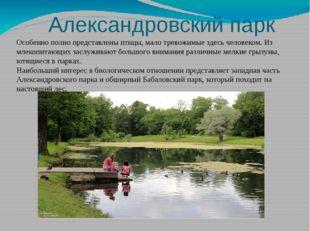 Александровский парк Особенно полно представлены птицы, малотревожимые здес