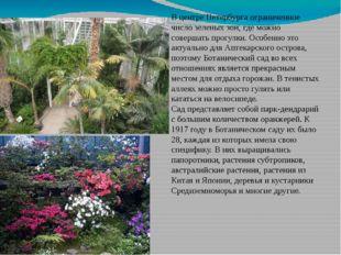 В центре Петербурга ограниченное число зеленых зон, где можно совершать прогу