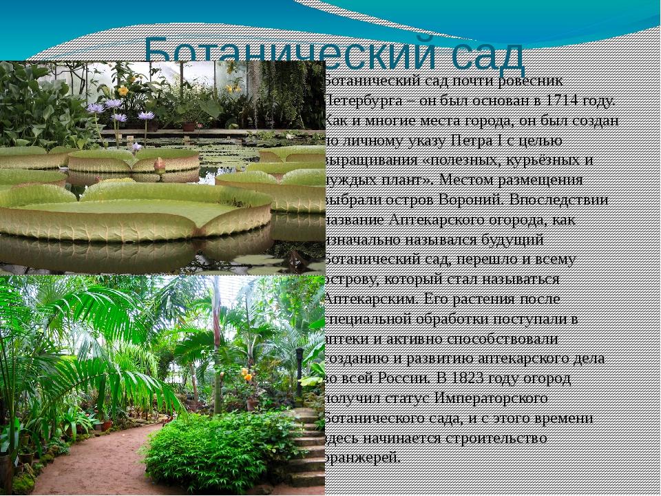 Ботанический сад Ботанический сад почти ровесник Петербурга – он был основан...