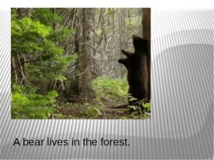 A bear lives in the forest.