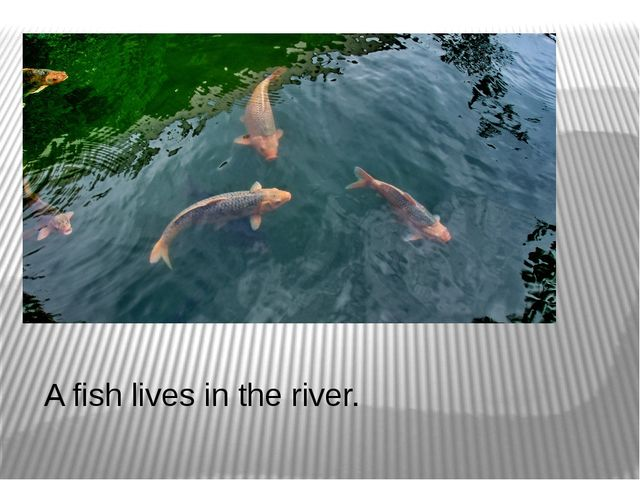 A fish lives in the river.