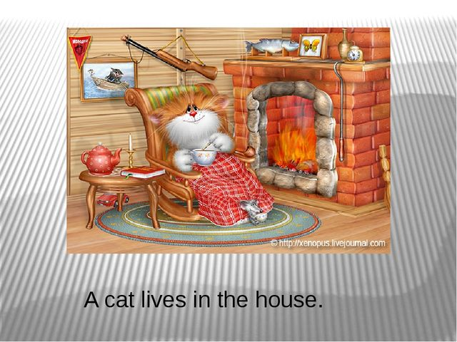 A cat lives in the house.