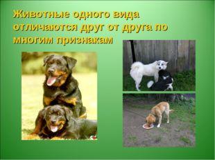 Животные одного вида отличаются друг от друга по многим признакам