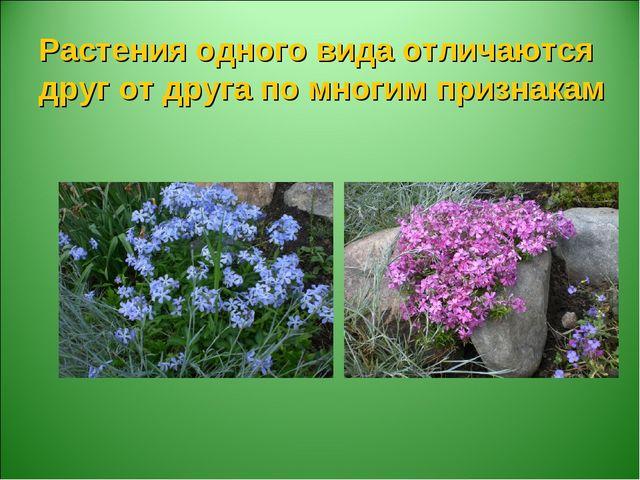 Растения одного вида отличаются друг от друга по многим признакам