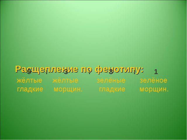 Расщепление по фенотипу: 9 : 3 : 3 : 1 жёлтые жёлтые зелёные зелёное гладкие...