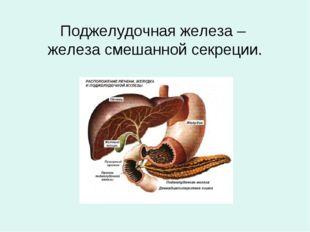 Поджелудочная железа – железа смешанной секреции.