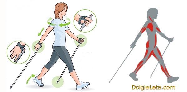 Реферат по физкультуре на тему скандинавская ходьба 8514