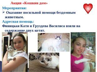 Акция «Кошкин дом» Мероприятия: Оказание посильной помощи бездомным животным
