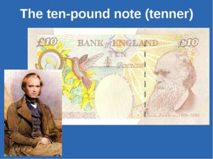 The ten-pound note (tenner)