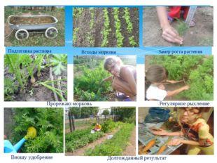 Подготовка раствора Всходы моркови Замер роста растения Прорежаю морковь Рег