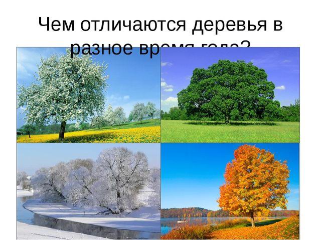 Чем отличаются деревья в разное время года?