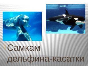 Самкам дельфина-касатки не откажешь в бдительности. Дело в том, что новорожд