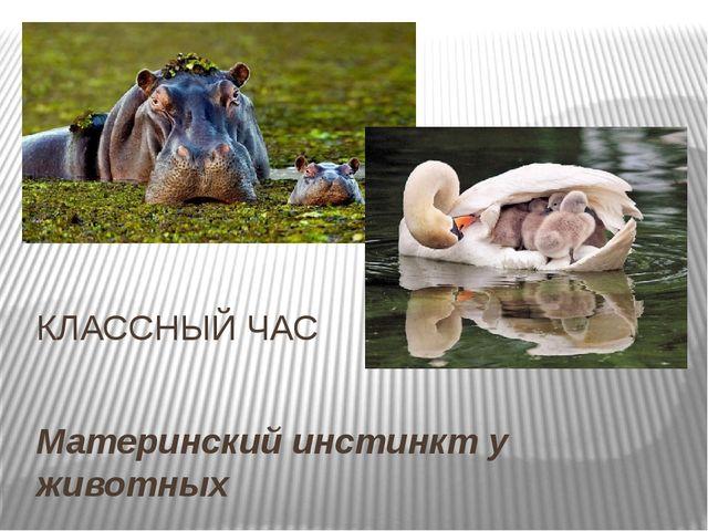 Материнский инстинкт у животных КЛАССНЫЙ ЧАС