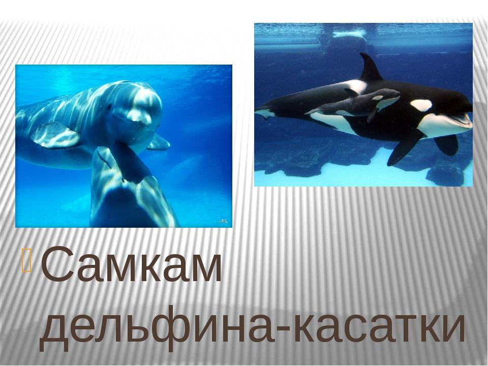 Самкам дельфина-касатки не откажешь в бдительности. Дело в том, что новорожд...