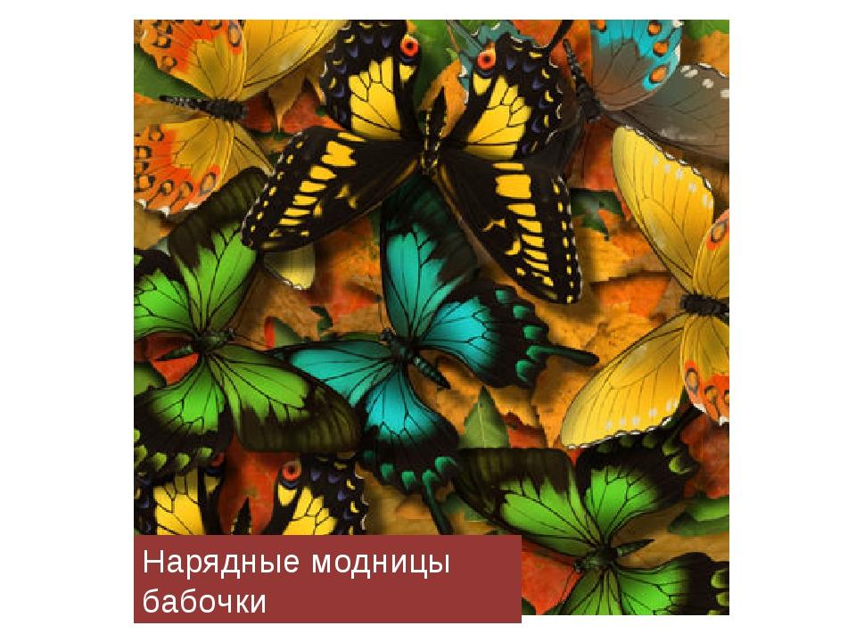Нарядные модницы бабочки