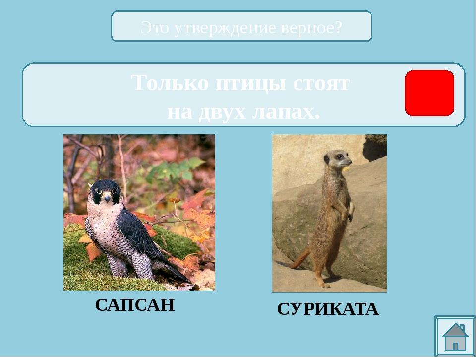 ССЫЛКИ НА ИСПОЛЬЗОВАННЫЕ ИСТОЧНИКИ: http://zoomet.ru/mal/malchevski_oglav.ht...
