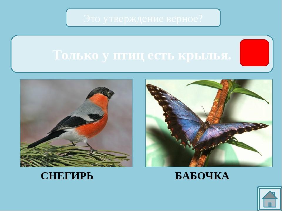сова орёл ВОРОБЕЙ журавль ГУСЬ дятел