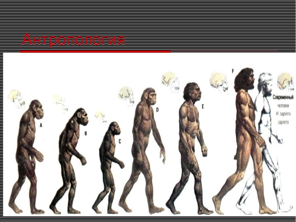 Антропология
