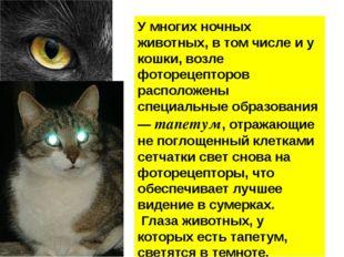 У многих ночных животных, в том числе и у кошки, возле фоторецепторов распол