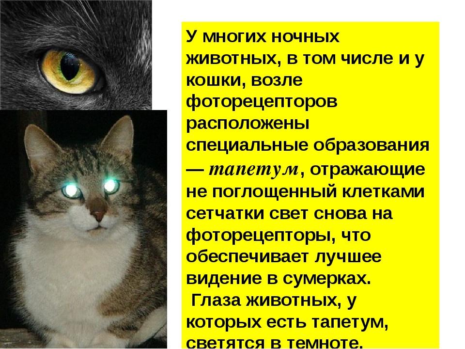 У многих ночных животных, в том числе и у кошки, возле фоторецепторов распол...