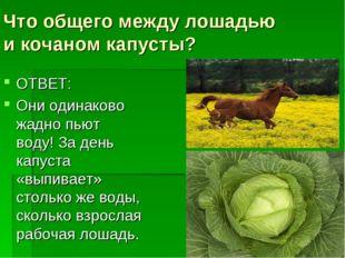 Что общего между лошадью икочаном капусты? ОТВЕТ: Они одинаково жадно пьют в