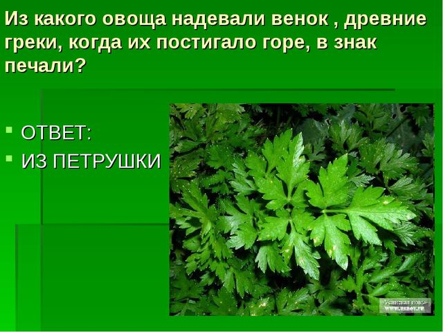 Из какого овоща надевали венок , древние греки, когда их постигало горе, взн...
