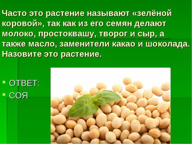 Часто это растение называют «зелёной коровой», так как из его семян делают мо...