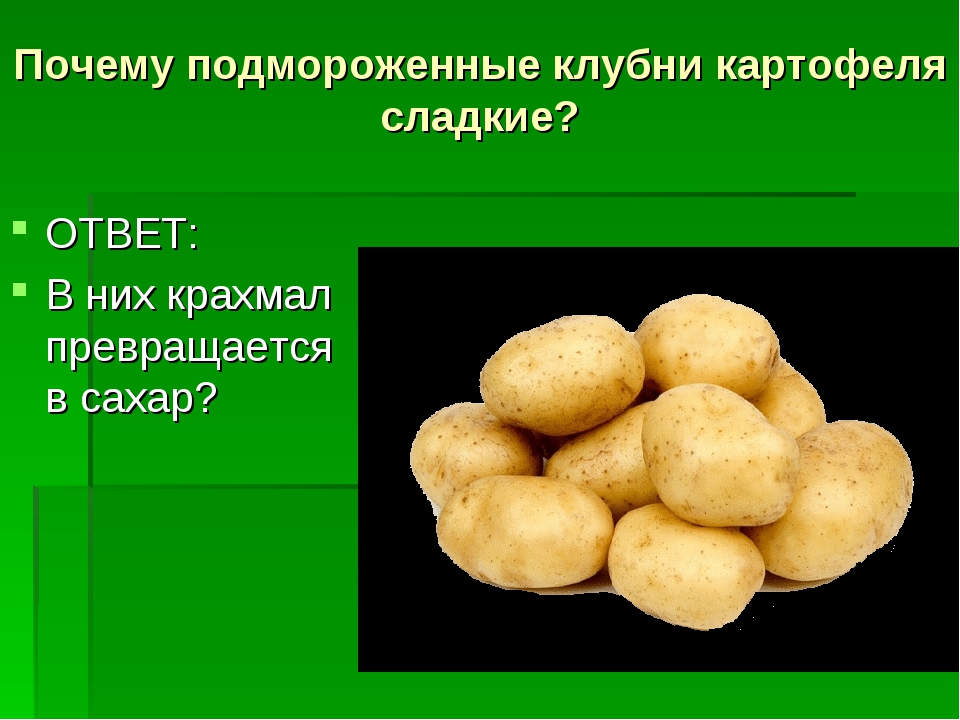 Почему подмороженные клубни картофеля сладкие? ОТВЕТ: В них крахмал превращае...