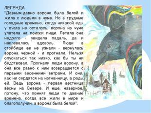 """ЛЕГЕНДА """"Давным-давно ворона была белой и жила с людьми в чуме. Но в трудные"""
