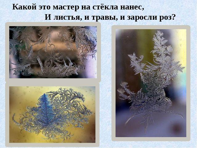 Какой это мастер на стёкла нанес, И листья, и травы, и заросли роз?