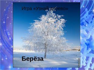 Берёза Игра «Узнай дерево»