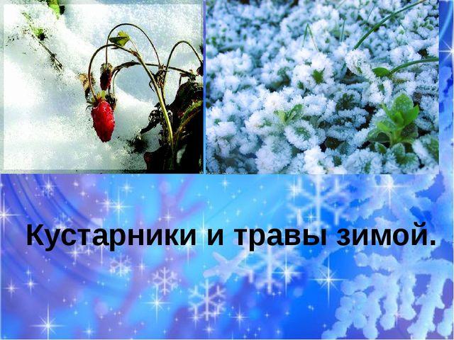 ТТ Кустарники и травы зимой.