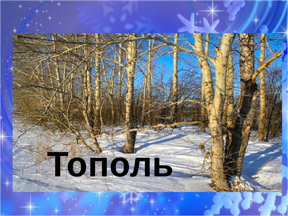 Т Тополь