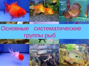 Основные систематические группы рыб