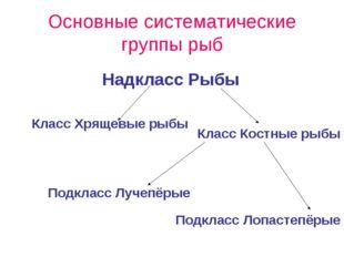 Основные систематические группы рыб Класс Хрящевые рыбы Класс Костные рыбы На