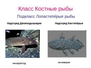Класс Костные рыбы Подкласс Лопастепёрые рыбы Надотряд Двоякодышащие Надотряд