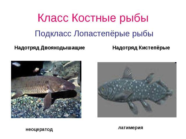 Класс Костные рыбы Подкласс Лопастепёрые рыбы Надотряд Двоякодышащие Надотряд...
