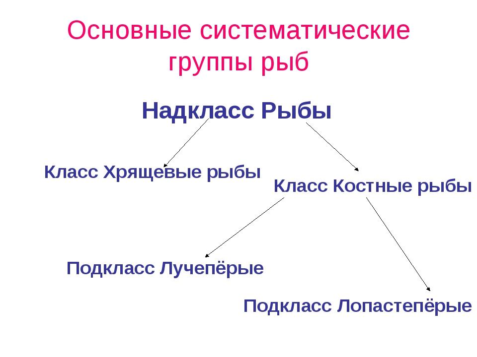 Основные систематические группы рыб Класс Хрящевые рыбы Класс Костные рыбы На...