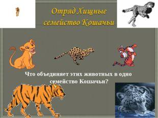 Что объединяет этих животных в одно семейство Кошачьи? Васильченкова Ирина Ан