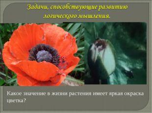 Какое значение в жизни растения имеет яркая окраска цветка? Васильченкова Ири
