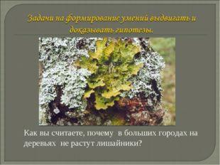 Как вы считаете, почему в больших городах на деревьях не растут лишайники? Ва