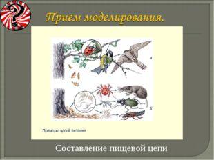 Составление пищевой цепи Васильченкова Ирина Анатольевна