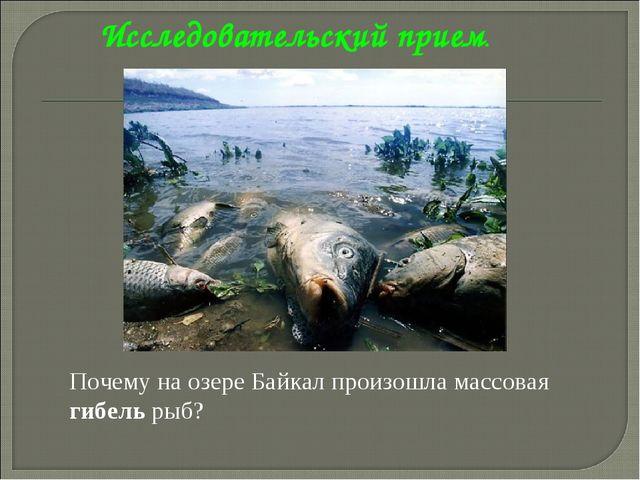 Исследовательский прием. Почему на озере Байкал произошла массовая гибель рыб...