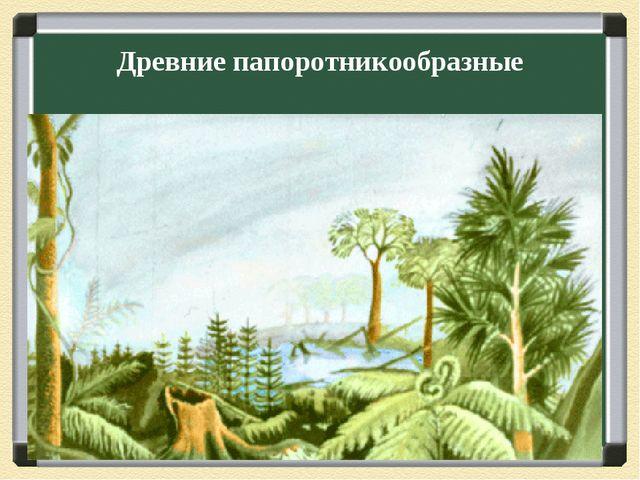 Древние папоротникообразные
