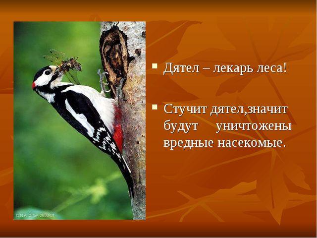 Дятел – лекарь леса! Стучит дятел,значит будут уничтожены вредные насекомые.