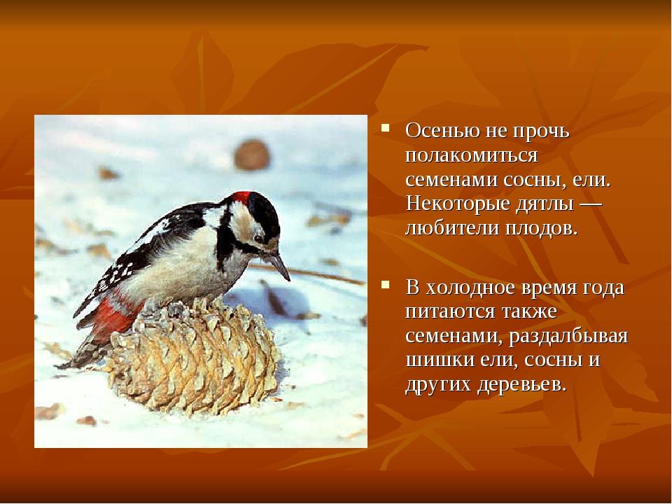 Осенью не прочь полакомиться семенами сосны, ели. Некоторые дятлы — любители...