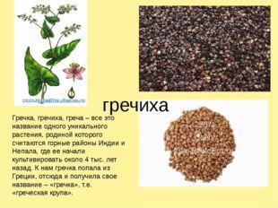 гречиха Гречка, гречиха, греча – все это название одного уникального растени