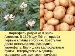 Картофель родом из Южной Америки. В 1697году Пётр I привёз первые клубни в Р