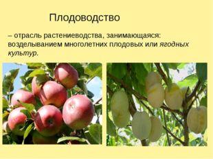 Плодоводство – отрасль растениеводства, занимающаяся: возделыванием многолетн