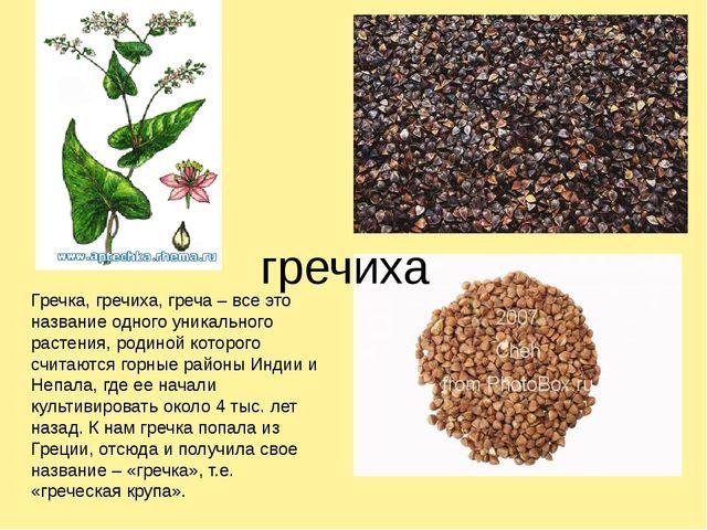 гречиха Гречка, гречиха, греча – все это название одного уникального растени...